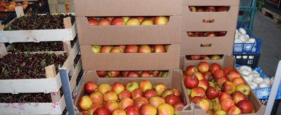 zdrowe-owoce-dla-szkol