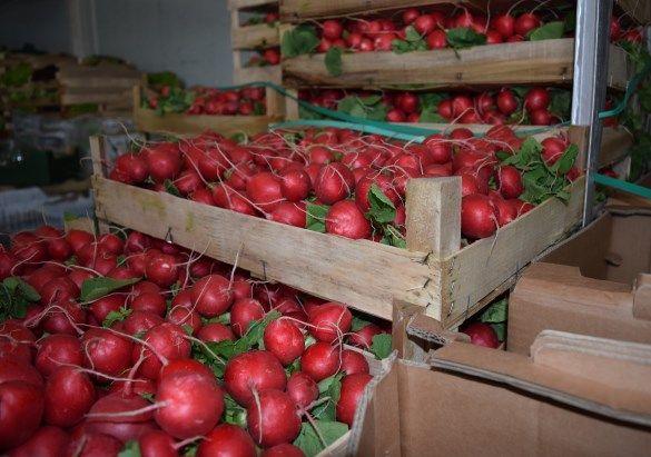 polmar-sprzedaz-warzyw