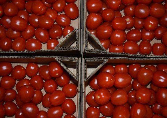 swieze-pomidorki-koktajlowe